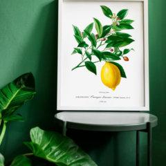 Rośliny na plakacie