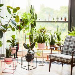 Wybieramy kwietniki do mieszkania od polskiego projektanta